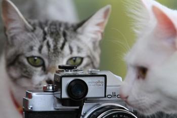 大丈夫です♪ぜひ彼らの可愛さを引き出した、素敵な一枚を撮りましょう。ただし、猫は光に敏感な生き物。激しい光をを浴びると目に悪影響を及ぼすので、フラッシュ撮影は厳禁です。