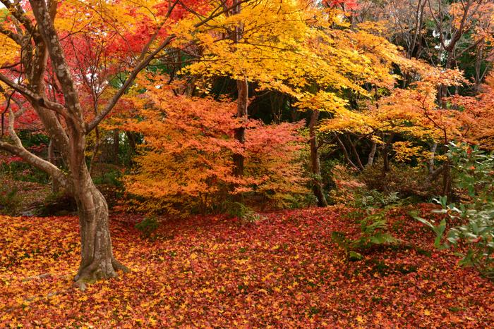 カエデやドウダンツツジ、モミジが天空を覆う参道や枯山水庭園は、得も言われぬ美しさ。紅葉の季節はぜひ訪れて頂きたい京都屈指の紅葉スポットです。