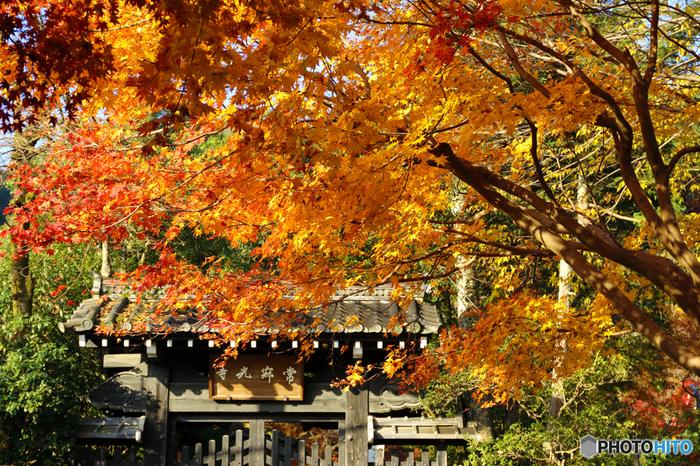 常寂光寺は、藤原定家の別荘「*時雨亭(しぐれてい)」があった小倉山の中腹に佇む古刹。慶長9(1604)年に建立され、本尊に十界大曼荼羅を祀っています。【画像は、江戸後期に建てられた「山門」。】