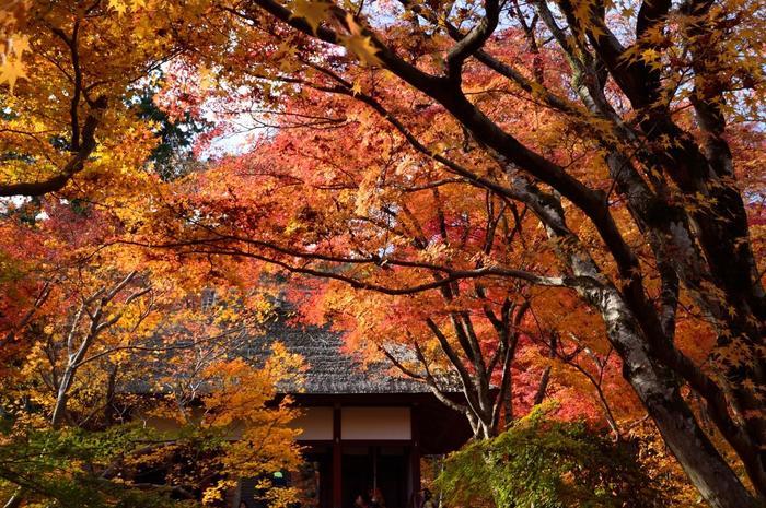 """ここ「常寂光寺」は、嵯峨嵐山屈指の紅葉の名所。豊かな自然と景観に恵まれたこの寺院は、仏教の理想郷で""""常寂光土""""ように美しいことから、名が付けられたと云われています。"""