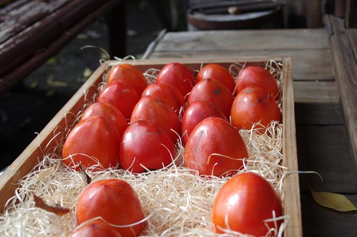 """「嵯峨ころ柿」の名物は、""""代白柿(だいしろかき)""""。 「代白柿」は、甲州百目という大型の不完全渋柿の一種です。日本各地でみられる渋柿ですが、蜂屋柿、富士柿、江戸柿等、土地それぞれで名が付けられています。京都では、独特の方法で渋みを抜いて頂きます。昔から、京都人の秋のデザートとして珍重されてきたものです。"""