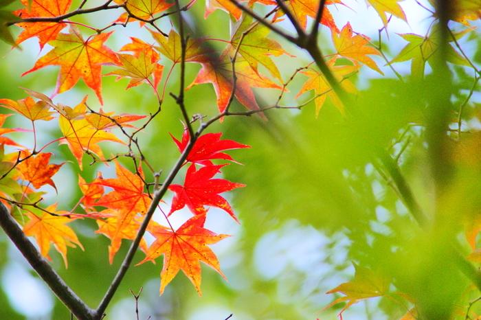 まさに今!紅葉の美しい「箱根湯本」でゆったり観光。アートスポットやくつろぎカフェ案内