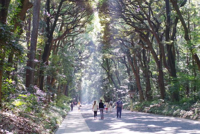 そのような守られてきた神聖なる森の中を、ゆっくりと散歩することができるのは、本当に贅沢なことですね。歴史を感じながら歩くと、また癒し効果が得られそう。