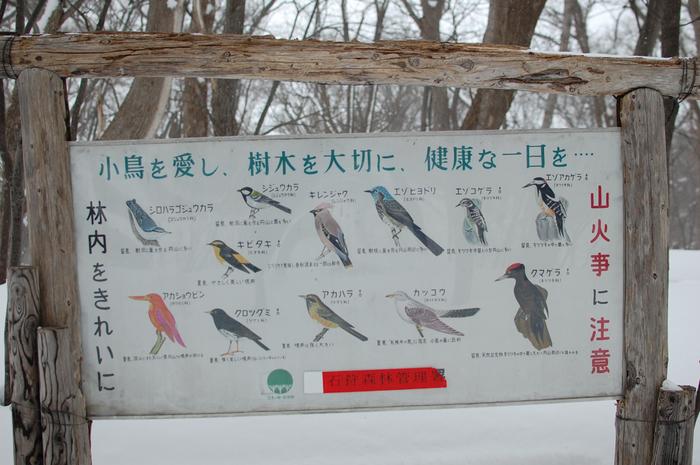 山歩きが好きな方なら、身近な低山でも野鳥に出会うチャンスがいっぱいです。こちらは札幌市中央区、円山登山道の看板。高さ225mの小さな山ですが、こんなにたくさんの鳥が住んでいるんですね。