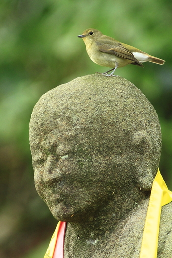 鎮守の森に守られる神社やお寺は、樹齢を重ねた大木が多く鳥達の棲家にもぴったり。富山市内の長慶寺では、小鳥が羅漢さんの頭にひらり。「ウグイスかヒタキの仲間では?」とのこと。なんだか微笑ましい眺めですね。
