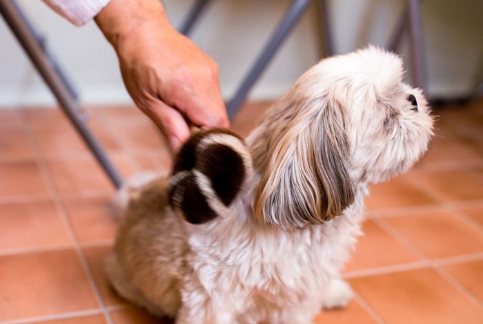 ペットにとってブラッシングは、健康を保つために欠かせないお手入れ。