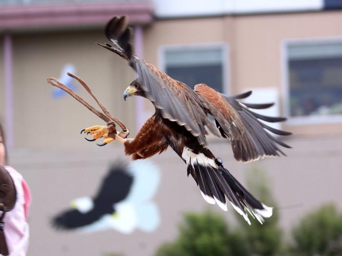 ハヤブサなどの猛禽類が飛び交うバードショーも、マリンライブやアシカショーとは違った魅力があります。よく調教された鷹やハヤブサが観客席ギリギリの高さを颯爽と飛び交ってゆきます。