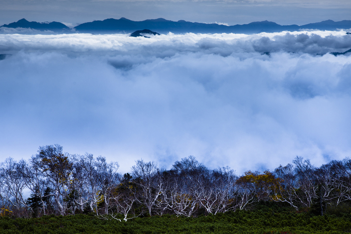 原生林の森を通り抜け、乗鞍岳山頂を目指す途中で神秘的な光景を目にすることができます。突如、高い樹木がなくなり、眼前に広がる植物や背の低い樹木と高山植物のみとなる様からは大自然の畏怖さえも感じ取ることができます。