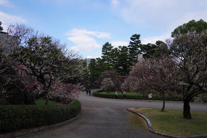皇居の東側に隣接する庭園、皇居東御苑の梅林坂周辺では、毎年2月頃になると紅梅、白梅などが美しく花を咲かせます。
