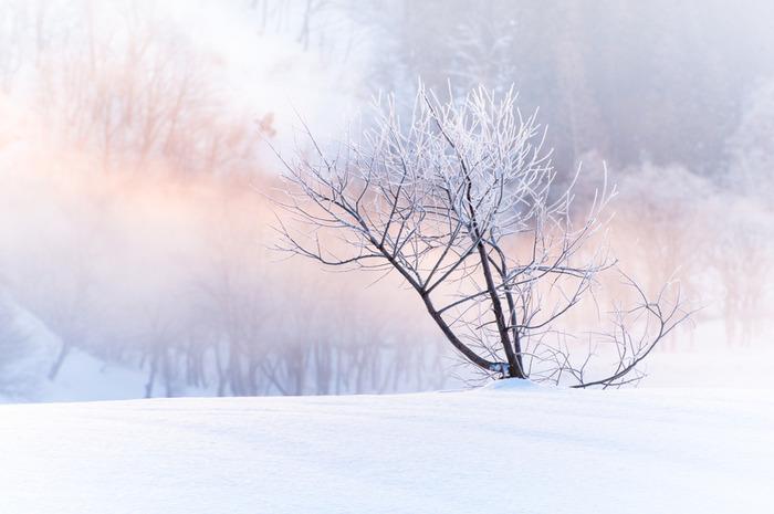 雪の名所といっても、その光景はさまざま。日本には、北国のダイナミックな白銀の世界から、京都などの情緒あふれる雪景色まで、さまざまな雪の風景を愉しむことができます。しばし、美しい純白の世界をのぞいてみましょう。