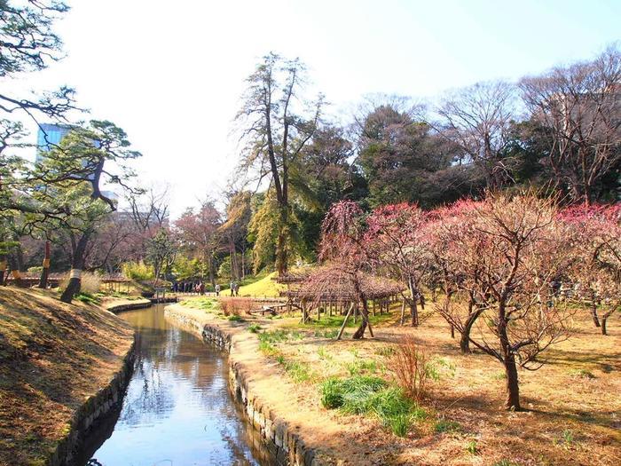 国の特別史跡、特別名勝にも指定されている小石川後楽園は、かの有名な水戸光圀(水戸黄門)が完成させた大名庭園です。広大な敷地内には様々な品種の梅が植栽されており、毎年春が訪れる頃、大勢の花見客で賑わいます。