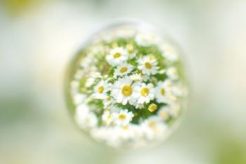 右の画像はガラス玉を利用した風景写真です。 周辺の光を取り込み輝くガラスに、小さく可憐なアイテムを閉じ込めたら・・・かわいいを掛け算できるガラスドームアクセサリーをご紹介します。