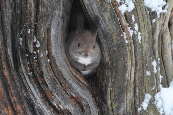 北海道産動物舎では、地元、北海道で生息している動物たちが展示されています。ここでは、豊かな自然が広がる北海道を代表する生き物、エゾリスにも会うことができます。