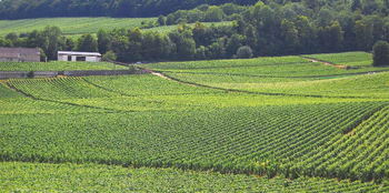 """""""美味しい""""がお目当ての大人旅 ~フランスに学ぶワインのたしなみ~"""