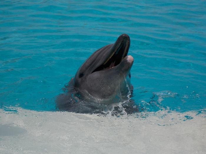 イルカラグーンでは、愛らしい姿をしたイルカをすぐ目の前で観察することができるほか、イルカに餌をあげることもできます。