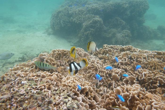 備瀬埼は、シュノーケルスポットとしても人気があります。海中では、色鮮やかな魚たちが泳ぎ回っており、小さな竜宮城のようです。