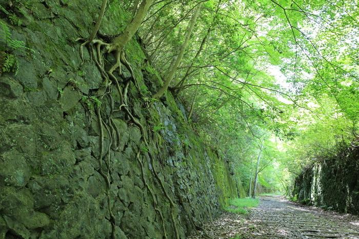武田尾廃線跡は、平坦な道が続いているため、軽装で気軽にハイキングを楽しむことができます。四季折々で美しい景色を見せてくれる武庫川渓谷の眺望を楽しみながら、レトロな枕木が続く道を歩いてみませんか。