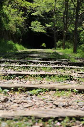 武田尾廃線跡にはレールが剥がされた枕木が残されています。小さな草が生え、地面に埋もれつつある古い枕木は、この区間が廃線となってから過ぎた30年以上という長い年月を物語っているかのようです。