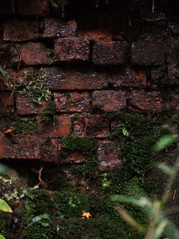 武庫川渓谷沿いの斜面に敷かれた線路脇には、レンガ造りの擁壁が残されています。地下水が染み出し、苔に覆われ、鉄道を守る役割を果たしたレンガの擁壁は、静かに時間を刻み続けています。