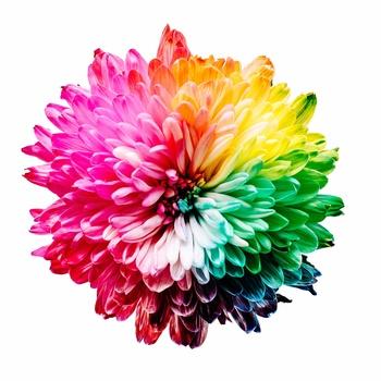 流行色、というと、その年に流行った、好まれた色だと思われがちですが、実は二年前から決まっていることをご存知でしたか?  一方、人が好む色というのは案外ずっと変わらないもののようです。色に関する多くの国際的な研究によると、年代や地域的特性、あるいは性格によって、ある色への特別な感情に差はあるものの、全体的に見ると「青」を筆頭に「赤」「白」が好まれる傾向にあるとのことです。 では、洋服やインテリア、あるいは家の屋根や外壁まで、それぞれのメーカーは好かれる色だけを作り続ければ良いのでしょうか?選択肢が溢れる現代、消費者のニーズに応えるならやっぱり色々な色からお気に入りを毎日選びたいですよね。  大雑把に言いますと、今年は「この色」とあらかじめ決めておいて、商品やムーブメントをみんなで作っていきましょう、という流れになっているのが流行色の現状です。 いくつかの団体・企業が発表している情報によると、ファッションに大きな影響を及ぼす世界的な流行色は、「INTER COLOR」という国際的な団体が発表している色のようです。日本もこの会議に出席し、色の提案を行っています。