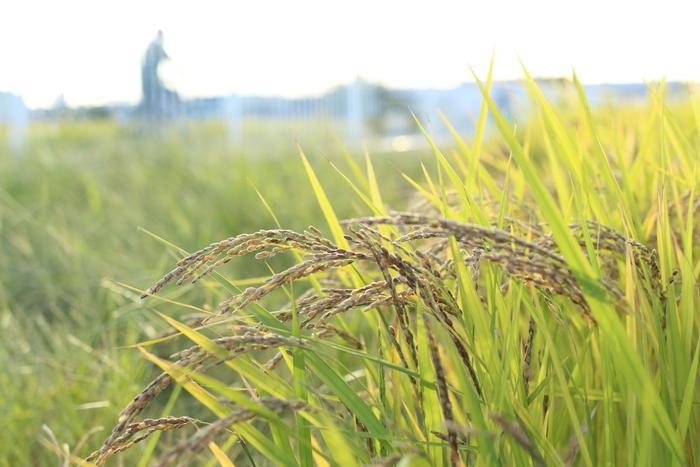 お米は野菜と同じ生鮮食品。ですので、保存の環境が良くないとすぐに風味が落ちてしまいます。