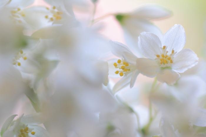白くて可愛らしい卯の花(ウツギの花)が咲く時期なので「卯月」。また4番目の月なので、十二支の4番目の「卯」がついたという説もあります。花残月(はなのこりづき)や清和月(せいわづき)といった風情のある別称も持っています。