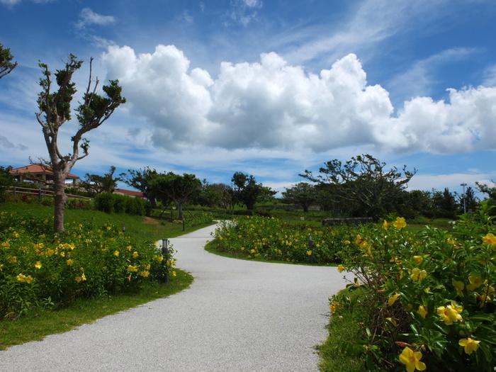 沖縄本島北西部に位置する海洋博公園は、1975年に沖縄県で開催された国際海洋博覧会の跡地に造られた公園です。園内には、沖縄県を代表する観光スポットとして人気を集めている「美ら海水族館」をはじめ様々な観光施設が集中しています。