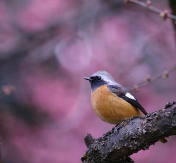 また旧暦の2月は現在の3月半ばを指し、梅の花を愛でたり、雪がだんだん解けていく時期。そこで、雪消月(ゆききえつき)、梅見月(うめみづき)なんていう呼ばれ方もします。
