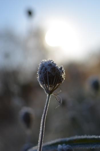 11月はとてもシンプルで、霜が降る月なので「霜月」です。また神無月に出雲大社に集まった神様が帰っていくので、神帰月(かみきづき)と呼ぶこともあります。