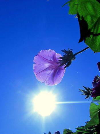 旧暦の6月は梅雨が明けて水がなくなる時期。そのため「水無月」という名前がついたといわれています。風待月(かぜまちづき)、涼暮月(すずくれづき)といった避暑を感じさせる別称もあります。