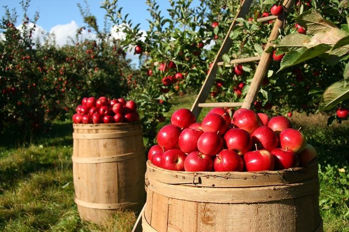 まるごと美味しい「焼きリンゴ」♪基本の作り方とアレンジレシピ