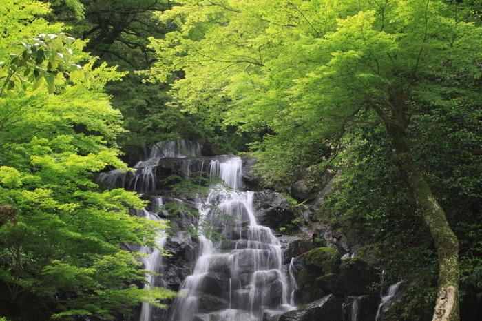こちらも福岡県指定の名勝「白糸の滝」。標高900mの羽金山の中腹に位置し、落差約24mのダイナミックな滝。マイナスイオンたっぷりで癒されます♪ヤマメ釣りやそうめん流し、7月頃にはあじさいが楽しめます。