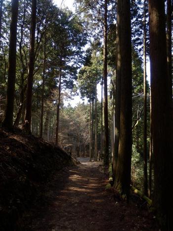 先に紹介した「来迎院」まで足を運ぶのなら、「音無の滝」へも足を伸ばしてみましょう。「来迎院」から徒歩で15分程度です。音無しの滝へは、林道を進みますので、雪や荒天の時は、服装や靴等、装備を万全に。