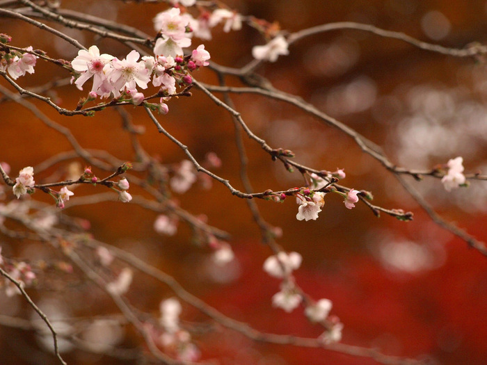 """冬の京都で、大原観光。里山に抱かれる""""わたしの京都旅""""。"""