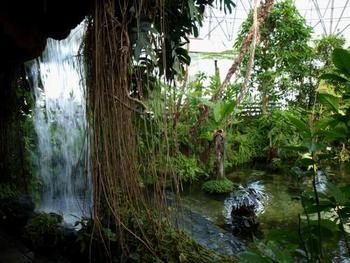 滝が見られたり橋を渡ったり、まるでジャングルを探検するかのように楽しめます。