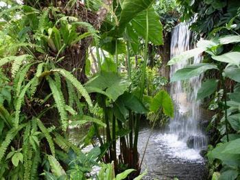 シダ・ヤシ類が豊富で、熱帯雨林の自然を再現しています。