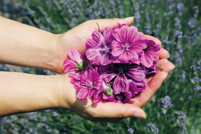 「マロウ」はヨーロッパ原産の多年草。和名は「ゼニアオイ」といい、花や葉から抽出されるエキスには糖類やポリフェノールが含まれています。「フラワー スピリット」には、世界自然遺産の地、秋田県・白神山地のふもとにある自社研究所の畑で無農薬栽培されたマロウから抽出したエキスを配合※1。毎日忙しく乱れがちなライフスタイルを送る女性の肌も、きめ細かくいきいきとしたなめらかな肌へと、きれいのサイクルを整えてくれるんです。