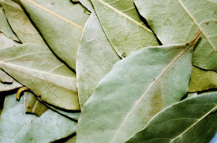 マリネやピクルスにも使われているローリエ(月桂樹)。かつお節などを浸す際に1~2枚一緒に入れておくと、ローリエの香りがプラスされたひと味違うポン酢が出来上がります♪