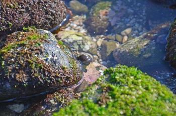 現れた通路は岩場になっているので、陰にヤドカリやカニなどの生き物を見つけることができます。