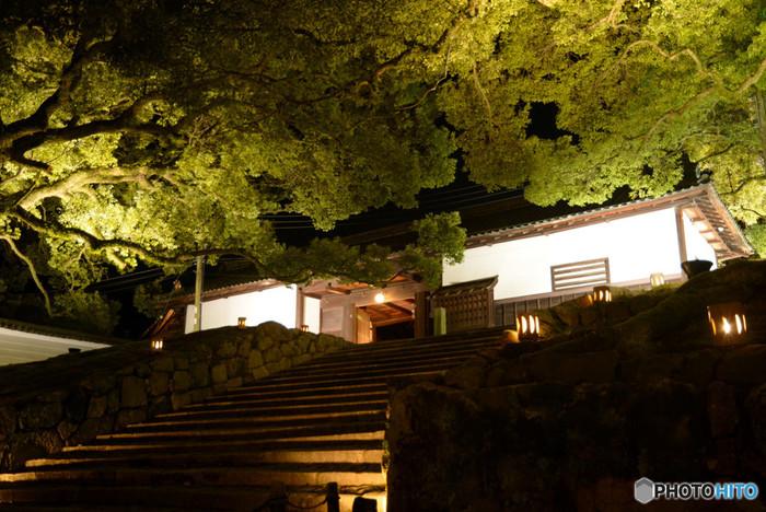 光そのものを本尊とする青蓮院では、門前の楠木が壮麗にライトアップされます。路地行灯に灯された長屋門へと続く石段は、闇夜と光が織りなす幻想的な世界が広がる境内への誘導口です。