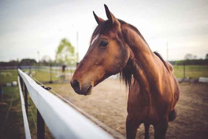 馬に乗って颯爽と風を切って走る姿、カッコいいですよね!実は週末乗馬女子、増えてきているんだとか。馬は繊細で優しい生き物なので、触れ合っているだけで心が癒されます。
