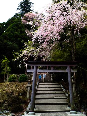 金峯神社は、吉野山の最奥地、「奥千本」地区に鎮座する神社です。日本古典傑作のひとつ、栄花物語は、平安時代の権力者、藤原道長が金峯神社を参拝したと綴っています。