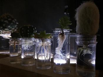 夕暮れどきは幻想的。夜間はライトアップしてもいいですね。案外知られていないけど、サボテンの新根って、綺麗な姿をしているんですよ!あのトゲトゲの姿からは想像もできないほど、スっと伸びる真っ白な新根は美しい!