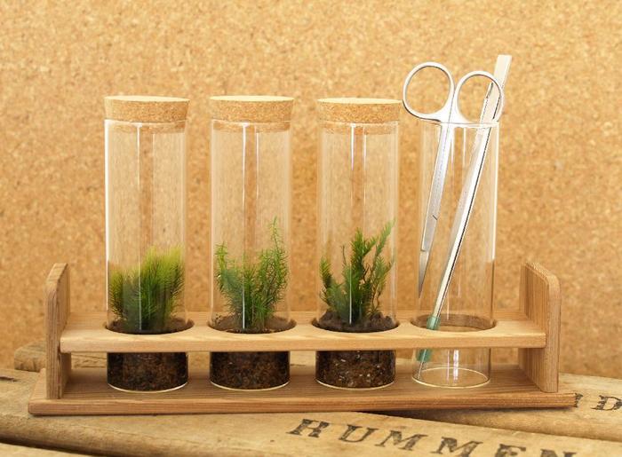 小さなボトルの中に、無限の世界が広がる苔テラリウム。丁寧に作るほど、そして数が増えるほどに、愛着がわいてきそうです。まずは手近な空瓶と、庭先にひっそり生えている苔から…あなたも小さな植物園、はじめてみませんか?