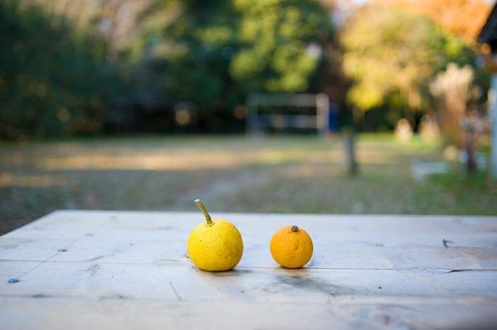 ゆずの香りがすると、あぁ秋冬が近づいてきたな…と思いますよね。これから旬を迎える「ゆず」は、酸味が強いため生食用には向かない柑橘類ですが、香りなどを楽しむ「香酸柑橘」として様々な料理の調味料として活躍しています。