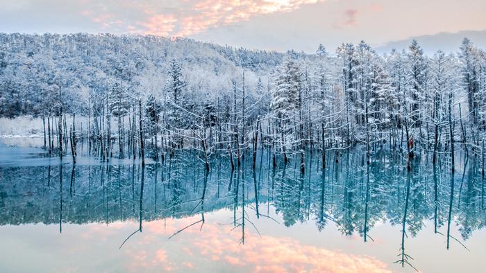神秘的なスポットとして知られる「青い池」は、静けさの中で雪が舞う頃、また一段と不思議な雰囲気に包まれます。冬期は、2月いっぱいライトアップが行われ、それ以降は立ち入り禁止になります。お早めに。