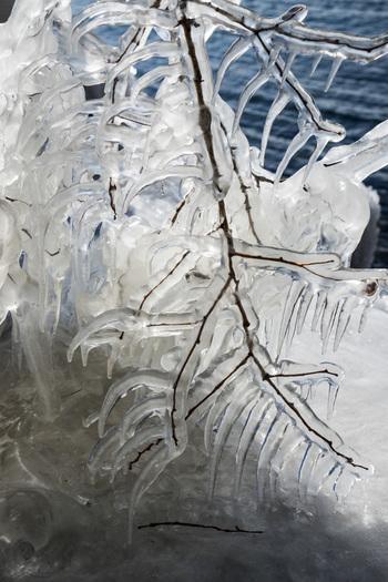 「しぶき氷」とは、湖水が強い西風にあおられて、岸辺の樹木に氷着したもので、とても珍しい現象だとか。