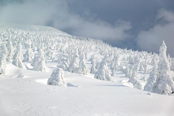 圧巻のスノーモンスター!あまりにも有名な蔵王の樹氷ですが、やはり雪景色の名所としてはずせない絶景地です。一度は訪れて、そのスケールを目の当たりにしてみたいですね。