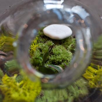 鑑賞して楽しむだけでなく、自分でDIYするのも「苔テラリウム」の楽しいところ。さっそく「苔テラリウム」の作り方と必要な材料をご紹介したいと思います。