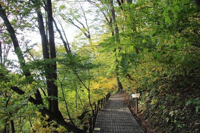 このようにちゃんと遊歩道が整備されている箇所も。遊歩道より少し険しく登山道より険しくない全体的に歩きやすい道であることから「遊山道」と言われているそうです。 世界遺産の白神を簡単に堪能できるのが嬉しいですね。